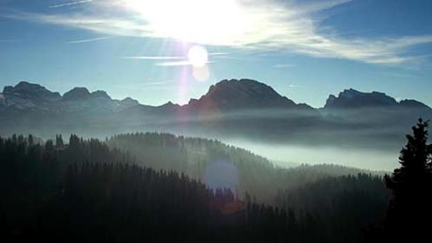 Blick über den Bödmerenwald zum Wasserberg