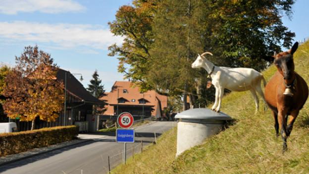 Sonne, Geissen, Herbst - Idylle in Guggisberg