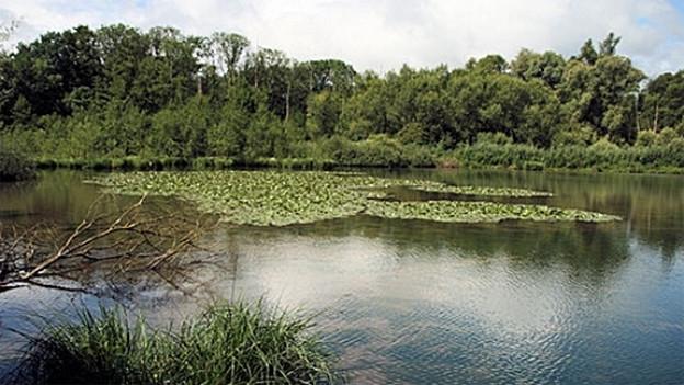 In der Petite Camargue Alsacienne lässt sich herrlich entspannen - und allerlei Tiere beobachten.