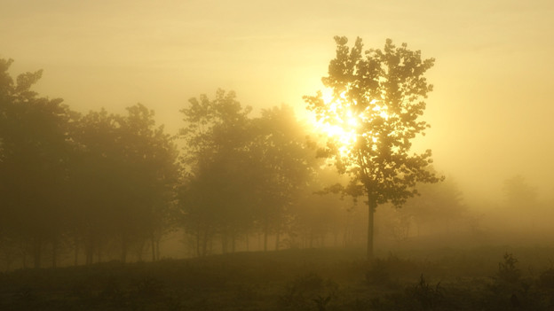 Ein Spaziergang durch den Neben ist die beste Prophylaxe gegen Herbstdepressionen.