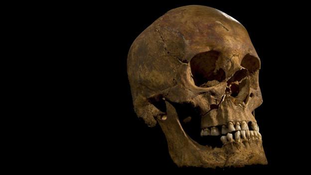 Neben dem Schädel von Richard III. wurden unter einem Parkplatz weitere Knochen gefunden.