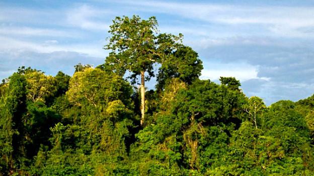 Regenwald im brasilianischen Amazonas.