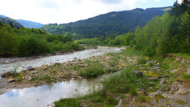 Flusslauf der Sense in der Nähe von Plaffeien FR: Der Abschnitt zwischen Plaffeien und Schwarzenburg BE gilt als eines der wenigen noch ziemlich naturnahen Flussstücke der Schweiz.