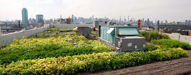 Vorbild USA: Gartenbeete auf einem Garagendach in Brooklyn.