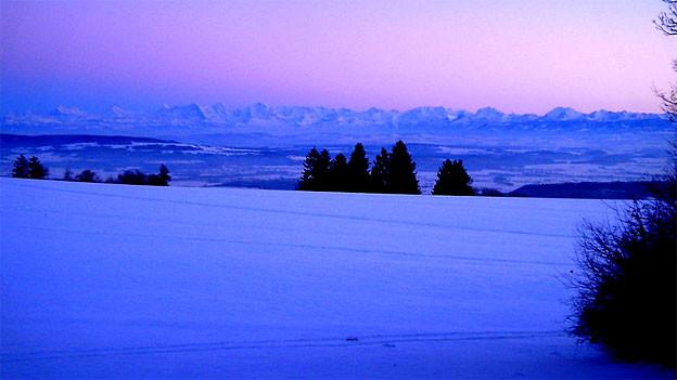 Sehnsucht Jura: Die Berner Alpen in der Dämmerung, vorne