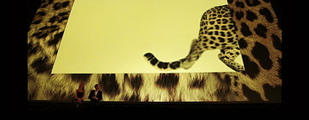 Schon vorbei: der Leopard auf der Piazza-Leinwand am Filmfestival Locarno.