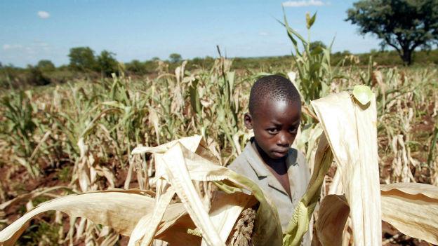 Simbabwes Landwirtschaft ernährt die Bevölkerung nicht