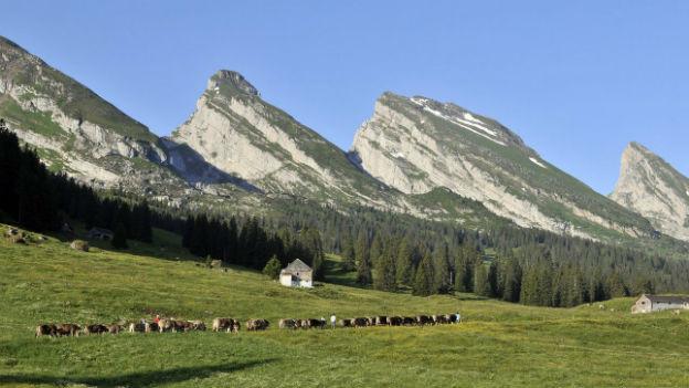 Trügerische Idylle? Tierschützer behaupten, in der Ostschweiz würde noch immer Hundefleisch gegessen.