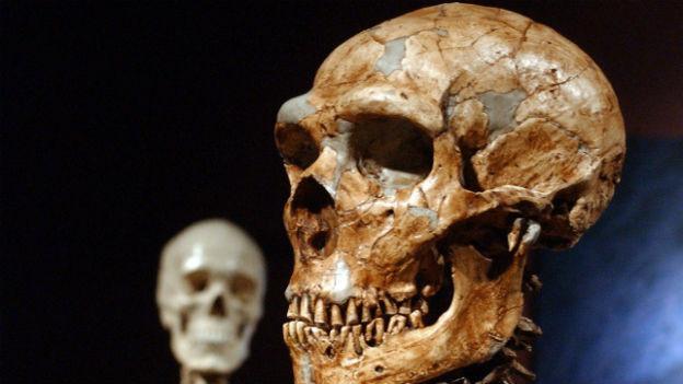 Nachbildung eines Neandertaler-Sekeletts.