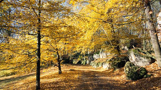 Da sich ab Dienstag die Körperkräfte nach innen richten, lässt sich gut auftanken. Vielleicht bei einem Spaziergang durch den herbstlich gefärbten Wald.