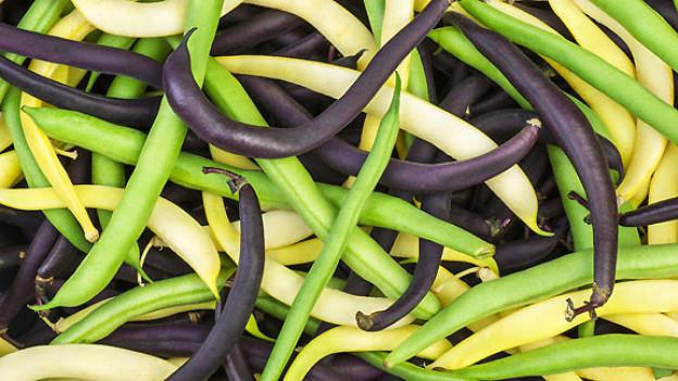 Buschbohnen gibt es in verschiedenen Farben: grün, gelb, dunkelviolett. Die dunkelvioletten werden beim Kochen grün.