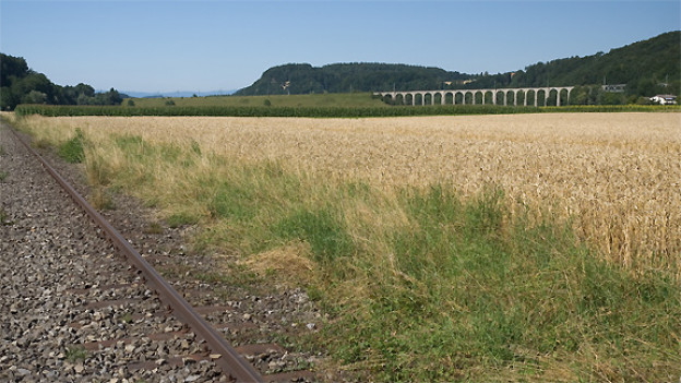 Die Gleise der still gelegten Sensetalbahn (links) mit Blick auf das Gümmen-Viadukt.