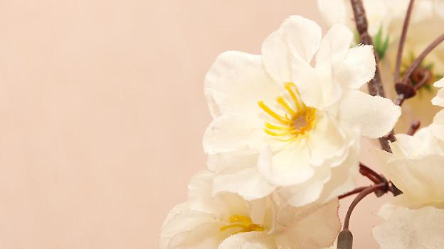 Tante Pauli hatte unter anderem die liebenswerte Eigenart, auch künstliche Blumen regelmässig zu giessen.