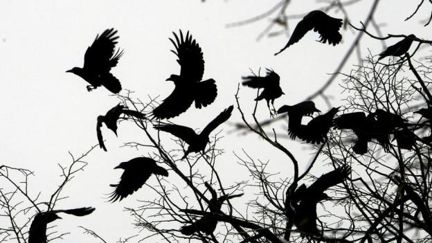 Silhouette von Krähen auf Baum