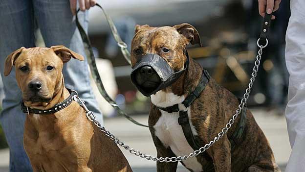 39'000 Hunde gibt es im Aargau. 2012 gab es 527 Meldungen wegen bissigen Hunden.