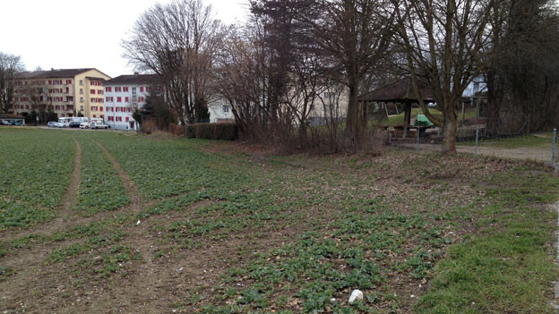 Auf diesem Acker, der einer Stiftung der Swatch-Gruppe gehört, hätte der neue Kindergarten gebaut werden sollen.