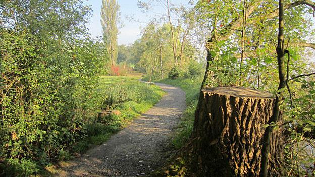 Der Spazierweg soll weichen: Hier möchte der Kanton ein Flachufer mit Holzsteg bauen. Doch der Steg ist umstritten.