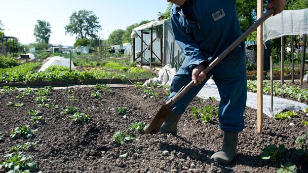 Wer trotz IV-Rente zum Beispiel im Garten arbeitet, gerät in Solothurn bald unter Verdacht des Versicherungsmissbrauchs.