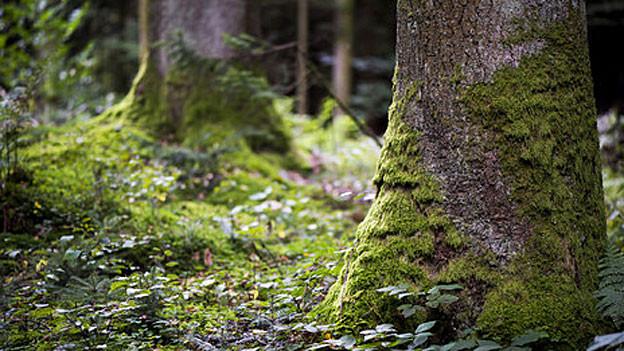 Waldbesitzer machen eigene Sparvorschläge