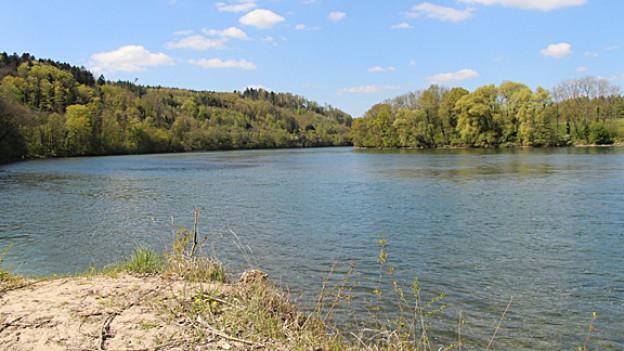 Landschaftsaufnahme mit Flussbett und Wald