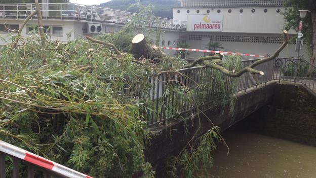 Trauerweide zerstörte die Restaurant-Terrasse der Badi Olten.