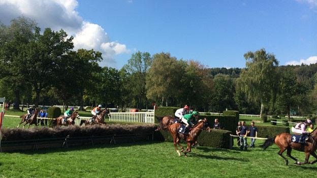 Aarauer Pferderennsaison ist am Sonntag zu Ende. Total kamen 2014 rund 30'000 Personen dafür nach Aarau.