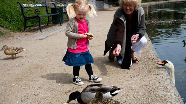 Enten füttern soll in Naturreservaten verboten werden.