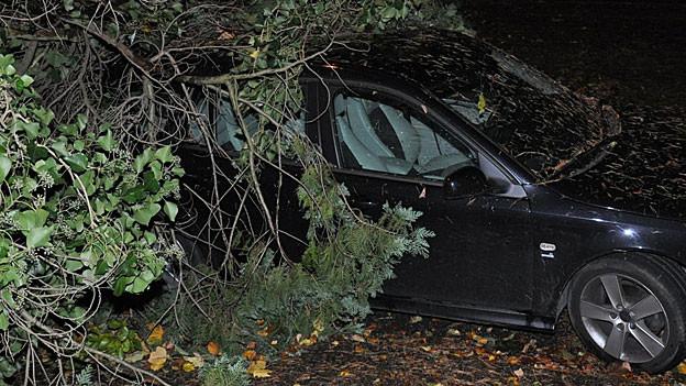 Grenchen: Baum stürzte auf Auto.
