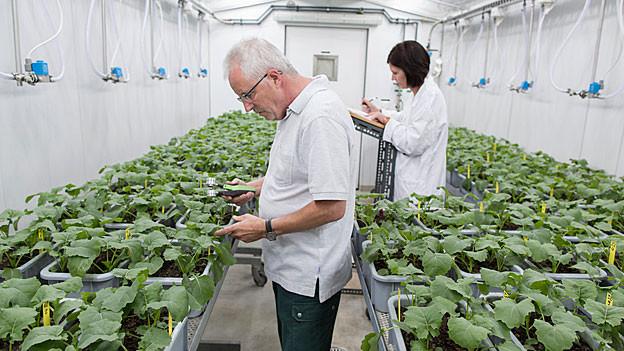 Syngenta Mitarbeiter forschen an Pflanzen in Stein