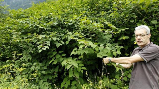 Ein Mann zeigt auf einen dichten Busch.