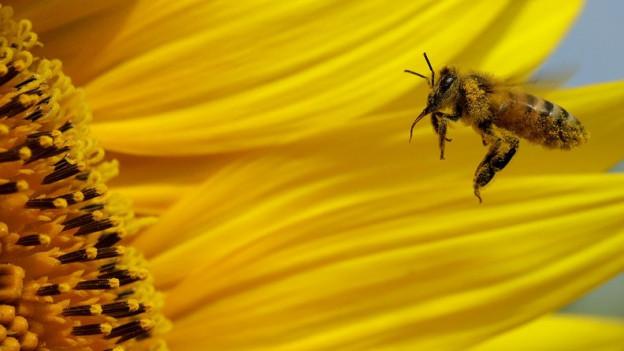 Insektenarten zählen: Das ist am Tag der Artenvielfalt möglich