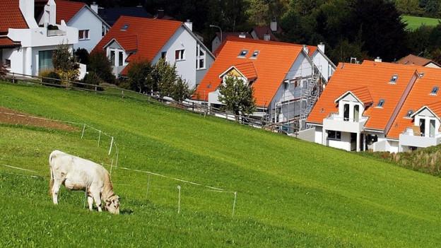 Kuh auf Wiese vor Einfamilienhäusern.
