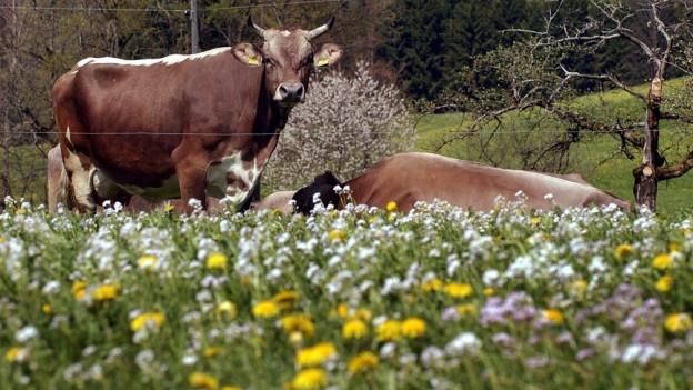 In der Solothurner Landwirtschaft bringen nachhaltig bodenschonende Massnahmen grossen Erfolg.