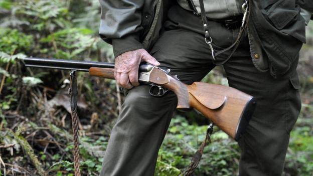 Solothurner Jäger müssen sich an Schäden von Wildschweinen beteiligen, das bestätigt nun das Bundesgericht.