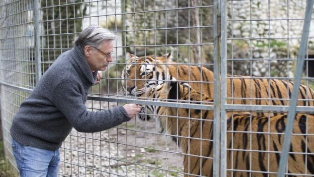 Strickler steht am Käfig, dahinter steht ein Tiger.