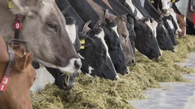 Fall Boningen: Regierung stellt sich hinter Veterinärdienst