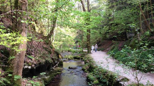 Seit den 1970er Jahren ist der Wald der Verenaschlucht ein Naturschutzgebiet.