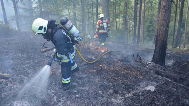 Feuerwehr löscht Waldbrand in Kleinlützel