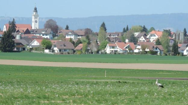 Grüne Wiese mit Storch. Im Hintergrund ein Dorf mit Kirchturm.