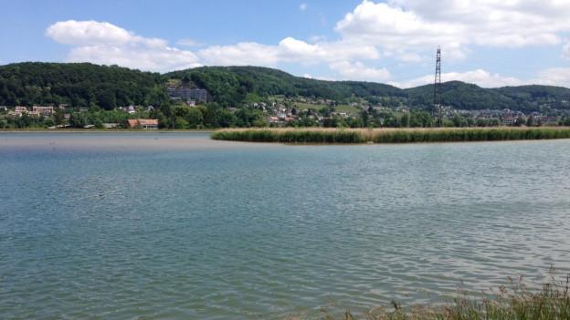 Der Klingnauer Stausee verlandet immer mehr. Der Kanton will ihn ausbaggern.