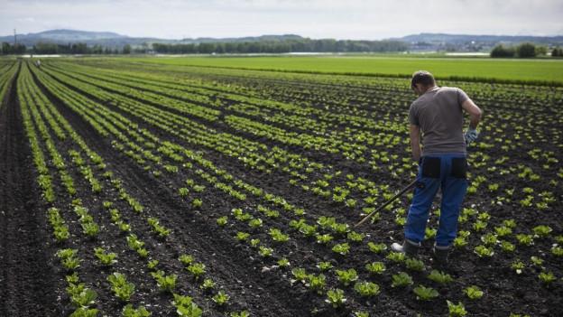 Die Bauern möchten eine Entschädigung vom Bund, wenn sie weniger Felder bewirtschaften. Der Bund will nicht. Was nun?