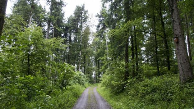 Der Aargauer Wald soll nicht mehr «automatisch» wachsen, so will es das neue Waldgesetz.