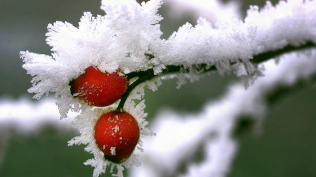 Nach den Frostschäden im Aargau kommt der Kanton den Bauern zu Hilfe.