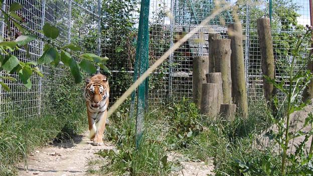 Strickler präsentiert Pläne für den Umzug des Raubtierparks