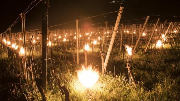 Auch im Aargau versuchten viele Bauern, Obst und Reben mit Kerzen vor der Kälte zu schützen, wie hier im Bündnerland.