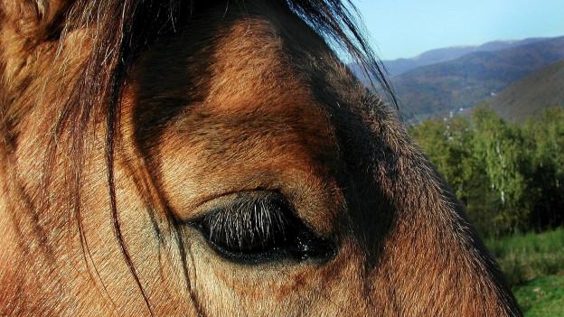 Das Pferde-Virus hat Auswirkungen auf das Polo-Turnier, aber es kann stattfinden.
