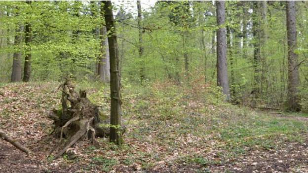 Von Auge kaum erkennbar: einer der 63 keltischen Grabhügel von Unterlunkhofen.