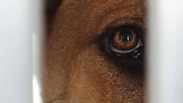 Wegen Tierquälerei kommen ein Mann und eine Frau in Zofingen vor Gericht: Sie haben zwei Hunde ertränkt.
