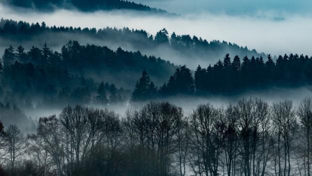 Die Initiative verlangt vom Kanton 16 statt 5 Millionen jährlich für den Wald. Die Abstimmung ist am 23. September 2018.