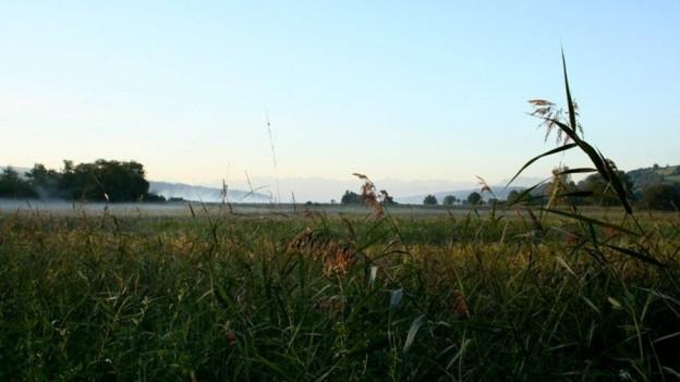 Das Boniswiler Ried, ein Flachmoor von nationaler Bedeutung, soll besser geschützt werden.